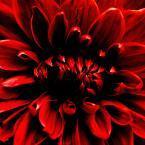 Rouge floral so design