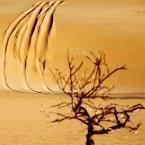 3-Desert bois