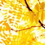 5-Jaune automne2