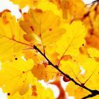5-Jaune automne