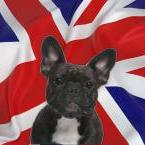 DECODEO-coussin-Londres-bouledogue-40x60