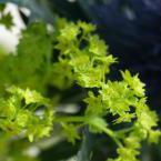 Petit bouquet macro