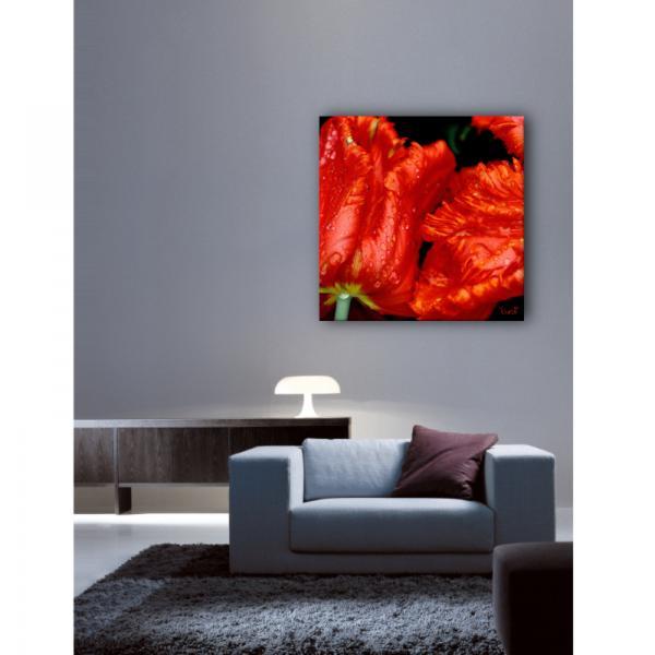 Tableau photo Tulipes Flammées