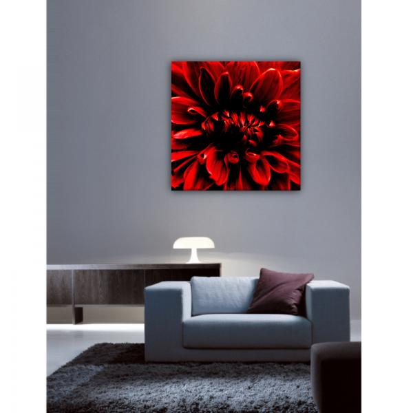 Tableau photo Pivoine Rouge