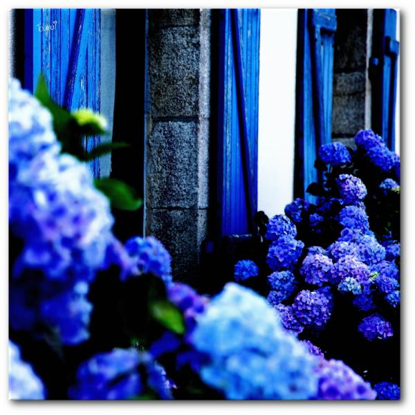 Tableau photo hortensias bretagne
