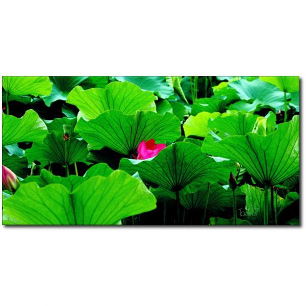 Toile-nature-fleur-de-lotus