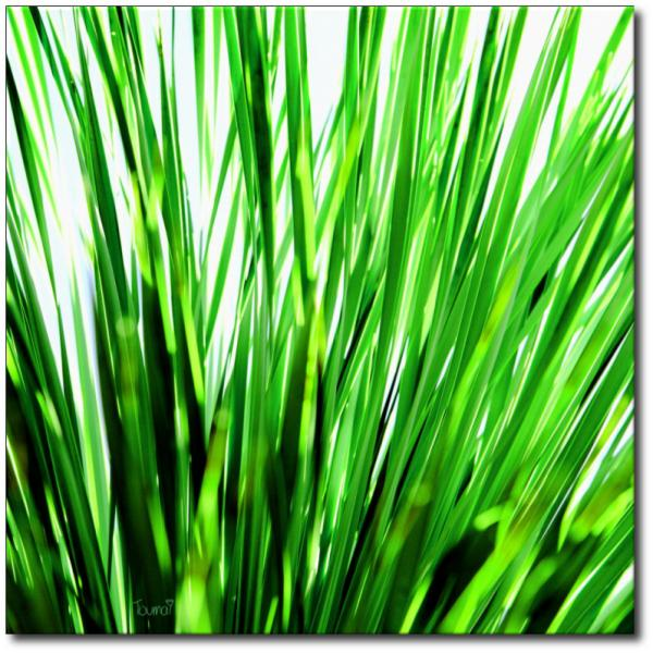 Toile-vert-nature-verticale