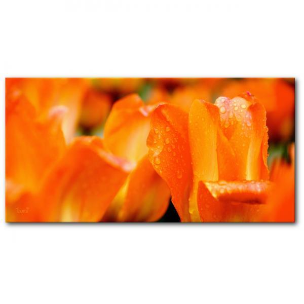 Tableau photo Tulipes sur toile