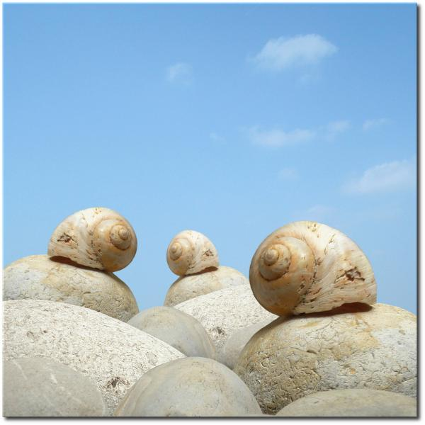 Escargot-beach CARRE